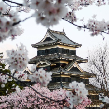 shutterstock_10776136-matsumoto-castle-during-cherry-blossom-sakura350-350